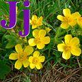 Alfabet roślin - literka J.jpg
