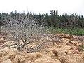 Altnaguinea Townland - geograph.org.uk - 1770344.jpg