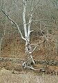 Alvastra kloster - KMB - 16000300037893.jpg
