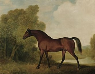 Ambrosio (horse) - Ambrosio, a bay stallion, the property of Thomas Haworth by George Stubbs
