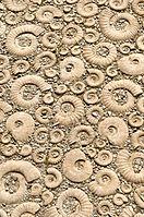Ammonite Design (3983985776).jpg