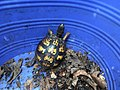 Amphibian reptiles found while working (37018998542).jpg