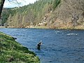 An angler fishes The Rhynd, River Spey - geograph.org.uk - 242865.jpg