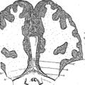 Anatomia Britannica- a system of anatomy Fleuron N001319-45.png