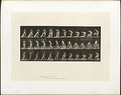 Animal locomotion. Plate 232 (Boston Public Library).jpg
