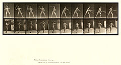 Animal locomotion. Plate 294 (Boston Public Library).jpg