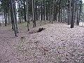 Antazavės sen., Lithuania - panoramio (60).jpg