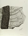 Antediluvian phytology - illustrated by a collection of the fossil remains of plants, peculiar to the coal formations of Great Britain (1838) (18747856143).jpg