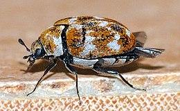 Ez Bed Bug Exterminator Chicago Chicago Il