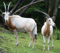 Antiloper.png