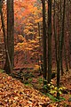Apatkuti moodscape autumn.jpg