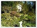April Magnolia grandiflora Freiburg Botanischer Garten - Master Botany Photography 2013 - panoramio (10).jpg
