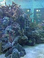 Aquarium in Pennekamp State Park.JPG