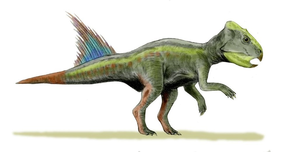 Archaeoceratops BW