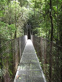 Arenal Hanging Bridges, Costa Rica.jpg