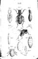 Assmuss parasiten 060.png