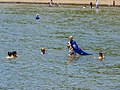 Australia Day 2011 Moora Park Shorncliffe Bramble Bay Queensland P1100405.jpg