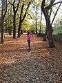 Autumn - panoramio (70).jpg