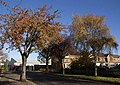 Autumn colours in Poplar Road, Ashford - geograph.org.uk - 1528381.jpg
