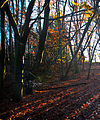 Autumn in Reigate (8204355623).jpg