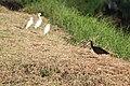 Aves em composição.jpg
