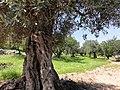 Azeqa - panoramio (1).jpg