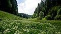 Bärwurzwiesen im Lichtenbachtal bei Rocherath, Ostbelgien (35162063515).jpg