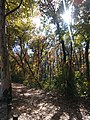 Bělehrad, Voždovac, Banjička šuma III.jpg