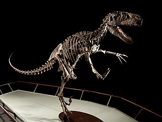 <i>Utahraptor</i> Extinct dromaeosaurid genus from the Early Cretaceous