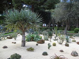 Bahá'í gardens - Cactus garden near the Shrine of the Báb