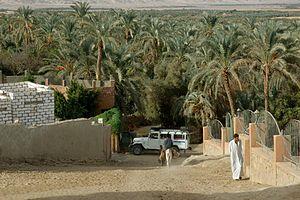 Bahariya Oasis - Bahariya Oasis