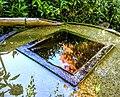 Bamboo Fountain - Butchart Gardens - Victoria, British Columbia, Canada (29325864256).jpg