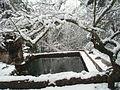 Bassa nevada.JPG