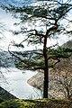 Baum an der Urft, Nationalpark Eifel.jpg