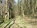 Beamond Wood - geograph.org.uk - 150547.jpg