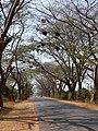Beehives on road Karnataka 0676 04.jpg