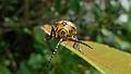Beetle face (17150153545).jpg