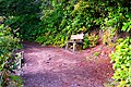 Bench along the Lake Marie Trail in Umpqua Lighthouse State Park.jpg