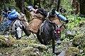 BhutanPackHorses.jpg