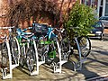 Bicycles in a bicycle stand in the city, on the Da Costakade in Amsterdam-West.jpg