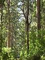 Big tree country - panoramio.jpg
