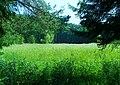 Biotopo Lagabrun (TN) m 1065 - Il trionfo di Phragmites australis... - panoramio.jpg