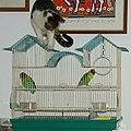Bird Watching 賞鳥 - panoramio.jpg