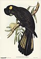 Bird illustration by Elizabeth Gould for Birds of Australia, digitally enhanced from rawpixel's own facsimile book352.jpg