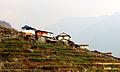 Birethati - Flickr - thapa.laxman.jpg