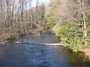 Black Moshannon Creek - Black Moshannon Creek, just downstream of the dam in Black Moshannon State Park