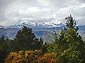 Blackmuir Wood - panoramio (16).jpg