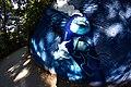 Blue Bird (26351395).jpeg