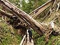 Boat Basin boardwalk, British Columbia - panoramio.jpg