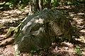 Bois de la Croix Boissée Souzy-la-Briche n1.jpg